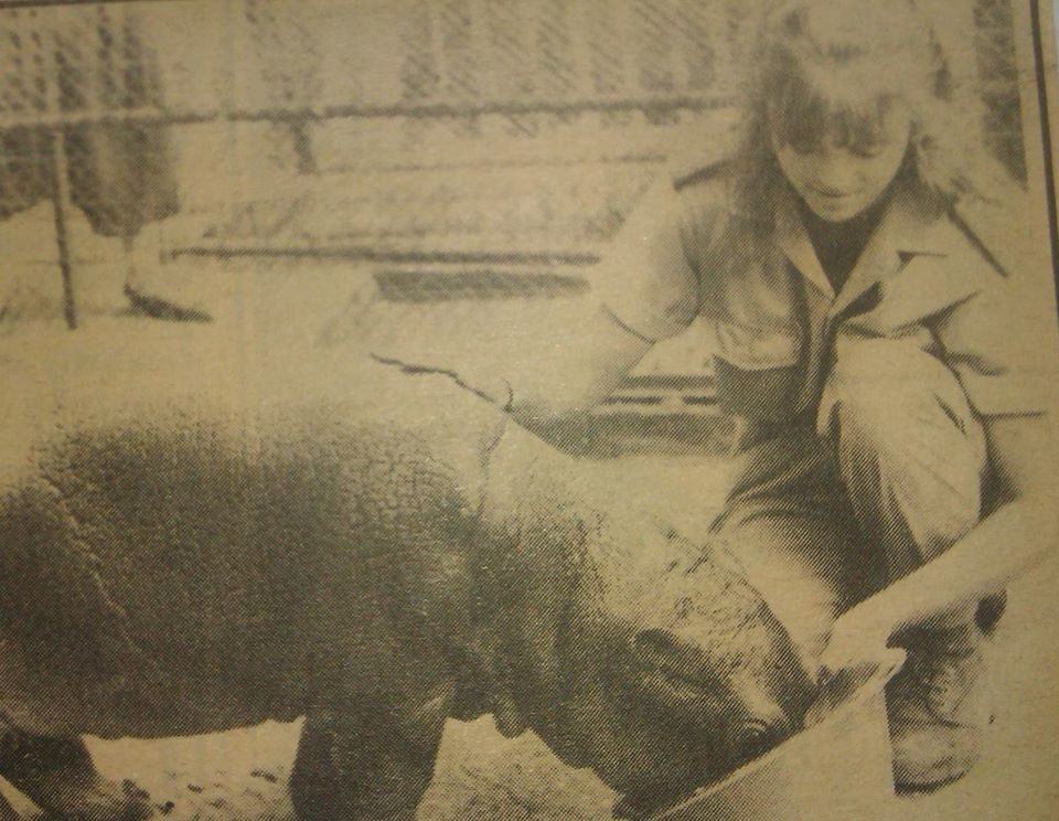 Image of a teenaged Charl Baillie feeding a baby hippo out of a bucket. She is stroking the hippo as it eats.